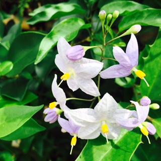 猛暑の中こんな涼やかなお花が❗️